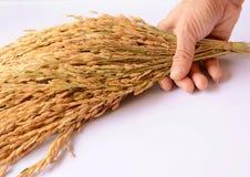Rice i ręka Zdjęcie Stock