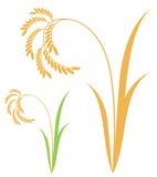 Rice. Isolated objects on white background. Vector illustration (EPS 10 stock illustration