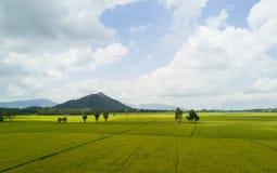 Rice jest głównym jedzeniem dla azjatykcich ludzi Fotografia Stock