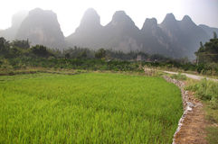 Rice and Karst Royalty Free Stock Images