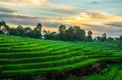 Rice koloru niebo Zdjęcie Royalty Free