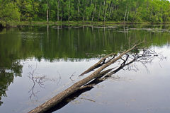 Rice Lake. In the Whitewater Segment of the Ice Age Trail in Wisconsin Royalty Free Stock Photography