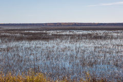 Rice Lake in Autumn Stock Photography