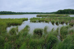 Rice Lake near Breezy Point. Rice Lake and grassy wetlands near Breezy Point Minnesota Stock Photography