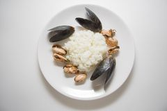 Rice with marinated mussels studio shot Royalty Free Stock Photo