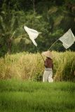 Ricefield Worker Chasing Birds in Sidemen, Bali. Royalty Free Stock Photography