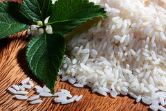 Rice mint Stock Photography