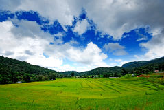 Rice on Mountain. Green Rice on the Mountain in Thailand Royalty Free Stock Photos