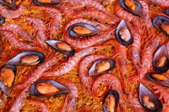 Rice with mussels and prawns. Paella: Spanish typical dish consists of rice and other elements, in this case shrimp and mussels stock images