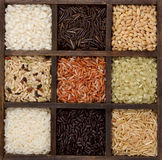 Rice nine varieties in a printers box Royalty Free Stock Photography