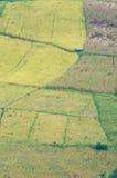 Rice och havrefält Arkivfoto