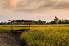 Rice odpowiada drewnianą chałupę Zdjęcie Royalty Free