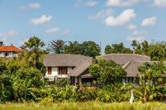 Rice odpowiada, drzewa i domy, wiejski krajobraz, Bali wyspa, Indonezja zdjęcia royalty free