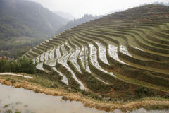 Rice odpowiada góry Fotografia Royalty Free