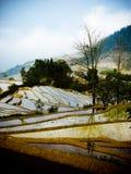 Rice odpowiada Yuanyang Chiny Zdjęcia Royalty Free