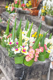 Rice offering flowers in Wat Phu or Vat Phou mountain temple. Rice offering flowers in Wat Phu or Vat Phou (mountain temple), world heritage site. Champasak Royalty Free Stock Photos