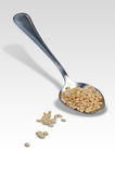 Rice Omp 008 Royalty Free Stock Photography