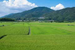 Rice Paddies Stock Photography