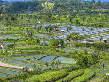 Rice paddies in Bali Indonesia Royalty Free Stock Photography