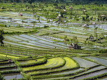 Rice paddies in Bali Indonesia Stock Photography