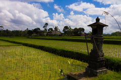 Rice Paddies in Bali Royalty Free Stock Photo
