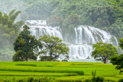 The rice paddies Ban Gioc waterfall Royalty Free Stock Photo