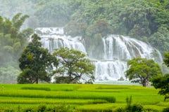 The rice paddies Ban Gioc waterfall Royalty Free Stock Photo