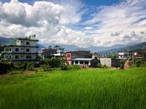 Rice paddies behind town Royalty Free Stock Image