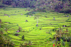 Rice paddies, Bukit Jambul, Bali, Indonesia Royalty Free Stock Photos