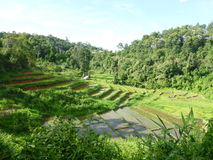 Rice Paddies of Chaing Mai Stock Photos