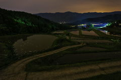 Rice paddies and firefly. It is rice paddies and firefly Stock Photography