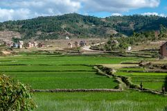 Rice paddies in the hills of central Madagascar. Ambositra, Madagascar - oct 2016 : green rice paddies in the hills and mountains of the highlands of Stock Image
