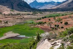 Rice paddies in the hills of Madagascar royalty free stock image