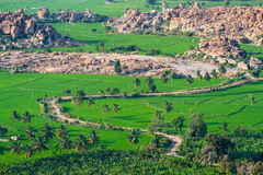 Rice paddies in India Stock Images