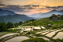 Rice Paddies in Japan Stock Images