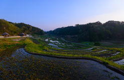 Rice paddies in Japan Royalty Free Stock Images