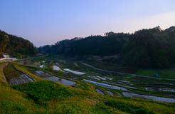 Rice paddies in Japan Royalty Free Stock Photos