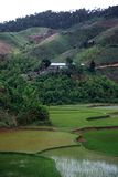Rice Paddies,Madagascar. Rice Paddies in front of a small village,Madagascar Stock Photos