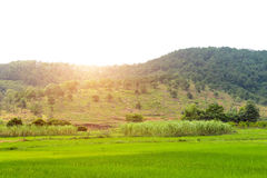 Rice paddies, mountains and more trees Royalty Free Stock Image