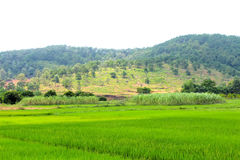 Rice paddies, mountains and more trees Royalty Free Stock Images