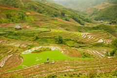 Rice paddies in the mountains, Northern Vietnam. Royalty Free Stock Images