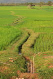 Rice paddies near Champasak Stock Images