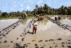 Rice Paddies near Tirta Gangga Stock Images