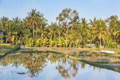 Rice paddies near Ubud in Bali Royalty Free Stock Images