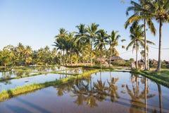 Rice paddies near Ubud in Bali Stock Image