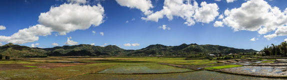 Rice Paddies Panorama around Buon Ma Thuot, Central Highlands, Vietnam. A paddy field is a flooded parcel of arable land used for growing semiaquatic rice. Paddy Stock Images
