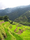 Rice paddies in Philippines Stock Photos