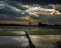 Rice Paddies Stock Photos