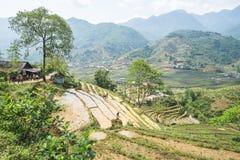 Rice Paddies of Sapa, Vietnam Royalty Free Stock Images