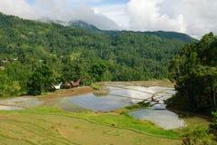 Rice paddies in Tana Toraja royalty free stock images